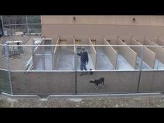 Dog Boarding Kennel Designs