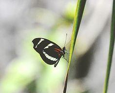 ku-pollinators
