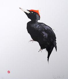 Karl Mårtens - Litografier « Edition Vulfovitch - black woodpecker watercolor