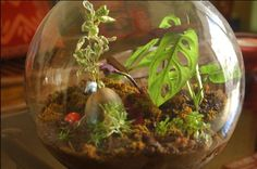 Terrariums are making a big comeback in home decor, and why not? They're easy to care for and super green!