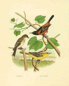 Bird art Vintage Bird Print Nature print Vintage by AntiqueWallArt, $10.00