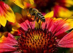 'Busy Buzzing Bee' by Jordan Blackstone