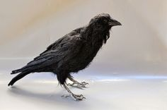 Needle Felted  Animal.The black crow. Real size .Made to order. by darialvovsky on Etsy https://www.etsy.com/listing/103259366/needle-felted-animalthe-black-crow-real