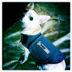 Thundershirt  This totally works, Nestle my 3 year old terrier mix...when he wears this, he is very calm.