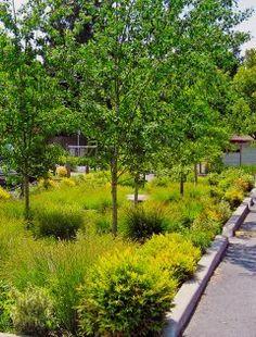 Byg et regnbed | Et regnbed er både en smuk løsning og sund fornuft. Regnbedet holder regnvandet i din have, så den bliver mere frodig, og bidrager samtidig til at løse problemerne med oversvømmelser efter skybrud. | Haveselskabet