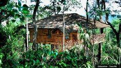 Tranquil Plantation Tree Villa - Kerala, India #treehouse #glamping