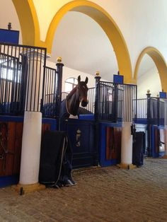 Nip Tuck at Jerez 2016 Equestrian Stables, Horse Stables, Dream Stables, Dream Barn, Horses, Barn Stalls, Tack, Barns, Palace