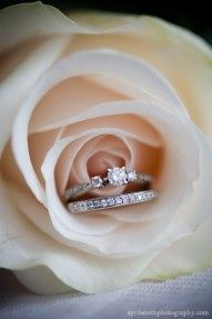 Sample Wedding RING ceremony for LDS weddings, photo by April Smith Photography . - Must-take wedding photos: 84 ideas for the big day Wedding Poses, Wedding Photoshoot, Wedding Shoot, Wedding Engagement, Wedding Rings, Wedding Ideas, Trendy Wedding, Wedding Decorations, Gold Wedding