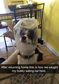 The Best Posts About Huskies On The Internet Internet Dog - The 25 best posts about huskies on the internet