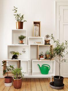 Les plantes vertes et les accessoires sont mis en scène dans une étagère déstructurée.