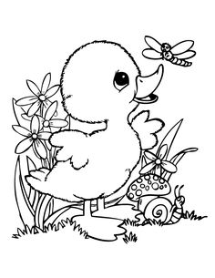 duck cartoon graphics | cute baby duck coloring page | fairytale ... - Cute Baby Seahorse Coloring Pages