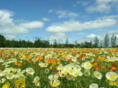 wiosna krajobraz - Szukaj w Google