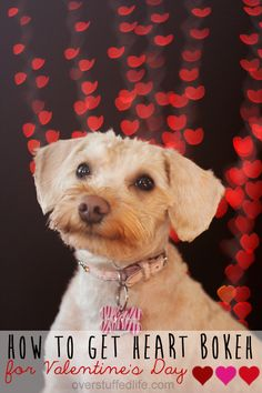 Simple method for making heart-shaped bokeh with your dSLR camera. Easy to do, and great for Valentine's Day photos!