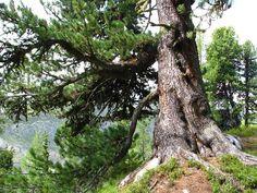 Der Urban Sports Club präsentiert: Die schönsten Waldwanderungen der Schweiz – Teil 2   Sporttipps in Zürich   Ron Orp