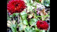 Blumentraum in Rot