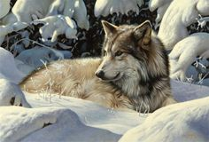Wolf painting by Steve Burgess