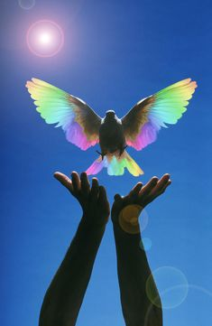 Releasing a dove or is this where Noah was releasing the bird to look for land~and it finally brought back and olive branch. Baby Animals Super Cute, Cute Little Animals, Cute Funny Animals, Cute Dogs, Cute Birds, Pretty Birds, Beautiful Birds, Animals Beautiful, Beautiful Pictures