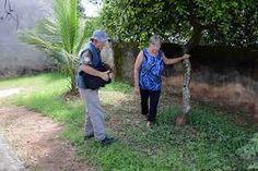 IRAM DE OLIVEIRA - opinião: Chikungunya provoca doenças vasculares irreversíve...