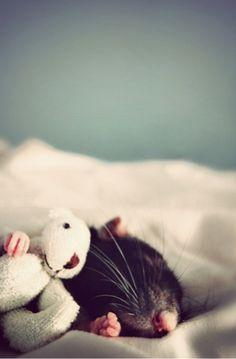 we all need a sleeping buddy :)