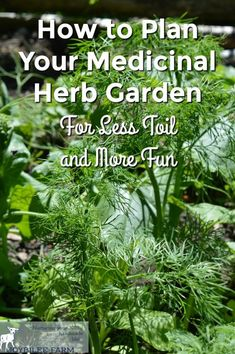 A medicinal herb garden is easy to grow using plants that are suited to your growing conditions and plant hardiness zone. But choosing the right plants for your growing conditions is the key to creating a successful medicinal herb garden that is easy to m Herb Garden Design, Diy Garden, Garden Plants, Flowers Garden, Shade Garden, Flower Gardening, Herb Plants, Garden Totems, Fairy Gardening