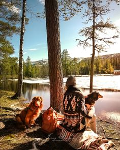 Memories made in nature live forever 💚🌿 ✨ In the memory of our loved family dog Rita ✨ This moment with my special girls… Lapland Finland, Time Warner, Special Girl, Family Dogs, Horses, Memories, In This Moment, Live, Couple Photos