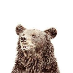 Carta da parati magnetica orso piccola
