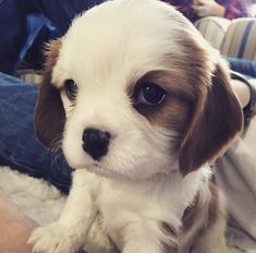 This little girl who easily has the cutest puppy dog eyes in existence. | 39 Adorable Pictures You Need To Stop And Look At Right This Second