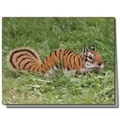 A TIGER SQUIRREL
