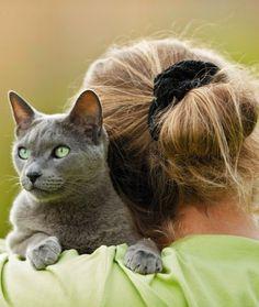 9. Russian Blue  12 friendliest breeds