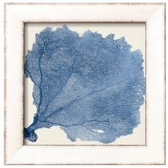 Art.Com Blue Sea Fan V Framed Art Print By Vision Studio (255 BAM) ❤ liked on Polyvore featuring home, home decor, wall art, blue, blue home accessories, blue wall art, sea fan, coral sea fan and blue home decor