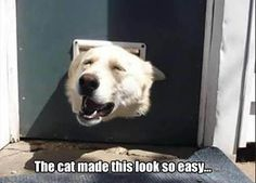 It's not as easy as it looks when you're bigger than you think you are! #funny #dogs #doglovers