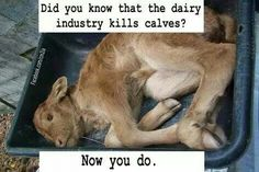 #vegan did you know that the diary industry kills calves? now you know. Please go vegan