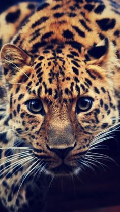 Beautiful creature - Look at those eyes