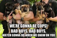 Funny Pictures, Funny jokes and so much more | Jokideo | Awesome dogs | http://www.jokideo.com