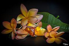 Teresa Fndz Photography: