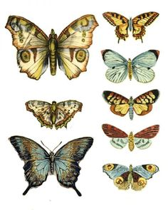 So many printable butterflies