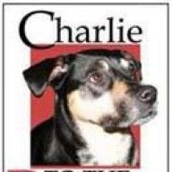 The fears of a shelter dog by Jayne Matthews | Charlie to the Rescue!