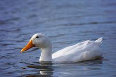 Animal Kingdom, Wordpress, Birds, Contemporary, Blog, Animals, Macros, Nice Asses, Animales