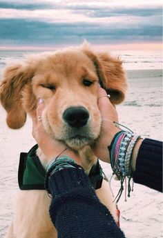 "Learn more relevant information on ""golden retriever dogs"". Look at our web site. Cute Baby Animals, Animals And Pets, Funny Animals, Cute Puppies, Cute Dogs, Dogs And Puppies, Doggies, Funny Dogs, Awesome Dogs"