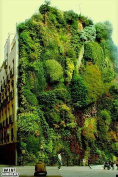 Fachada revestida de vida vegetal. Vertical Garden Madrid