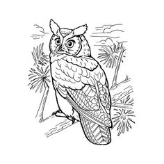 To print «coloring-owls-5», click on the printer icon at the right of this page