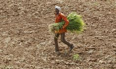 India's climate tech revolution is starting in its villages www.theguardian.com/sustainable-business/2015/oct/12/indias-climate-smart-villages-use-technology-improve-farming?utm_content=buffer66ed5&utm_medium=social&utm_source=pinterest.com&utm_campaign=buffer calgary.isgreen.ca/?utm_content=buffer66f89&utm_medium=social&utm_source=pinterest.com&utm_campaign=buffer