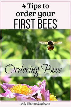 Gardening For Beginners The questions you must ask when you order your first bees. - How to order honey bees - the questions you must ask and what you need to know. Beekeeping For Beginners, Gardening For Beginners, Raising Bees, Raising Goats, Vegetable Garden For Beginners, Bee Keeping, Queen Bees, Garden Planning, Things To Know