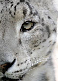 Adoro esse olhar felino ^^                                                                                                                                                                                 Mais