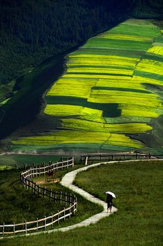 Travel Asian China Qilian, Qinghai, China 青海 祈連 Rapeseed field