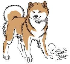 Resultado de imagen para akita
