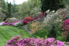The Azalea Garden at #Biltmore House is in full bloom the first week of May! Spring color continues in Biltmore's gardens. www.biltmore.com