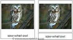 NOMENCLATURE:Montessori owls - Yahoo Search Results Yahoo Image Search Results