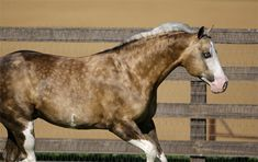 Show Horse Gallery - Big Chex to Cash