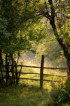 country light, beautiful green summer, simple fence
